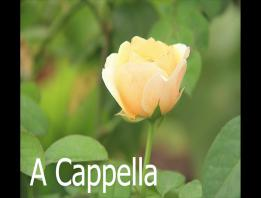 Embedded thumbnail for Thể loại thanh nhạc A Cappella (P2)